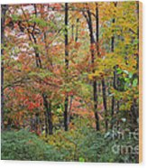 Point Beach State Forest Wood Print