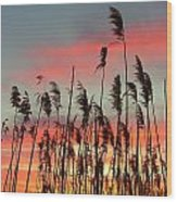 Point Pelee Sunset Wood Print