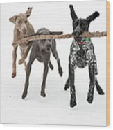 Pointers Rule, Weimaraners Drool Wood Print by Michael Fiddleman, fiddography.com