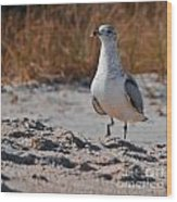 Poised Seagull Wood Print