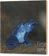 Poisonous Blue Frog 03 Wood Print