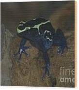 Poisonous Frog 01 Wood Print