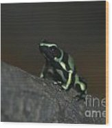 Poisonous Green Frog 03 Wood Print