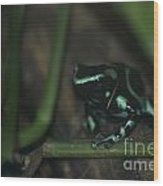 Poisonous Green Frog 04 Wood Print