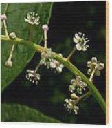 Poke Sallet Flowers Wood Print