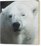 Polar Bear - 0001 Wood Print