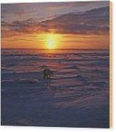 Polar Bear In Arctic Sunset Wood Print
