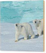 Polar Bear, Ursus Maritimus Wood Print