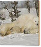 Polar Bear With Cub In Snow Wood Print