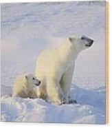 Polar Bear With Cub Wood Print