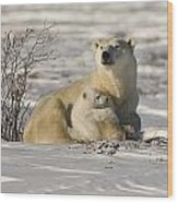 Polar Bear With Cub, Watchee Wood Print