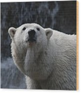 Polar Bear With Waterfall Wood Print