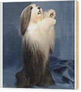 Polish Lowland Sheepdog 243 Wood Print