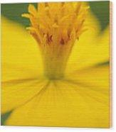 Pollen Cosmos  Wood Print