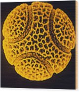 Pollen Grain Of The Passion Flower Wood Print