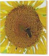 Pollen Hunter Wood Print