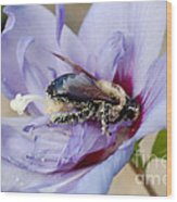 Pollen Passion Wood Print