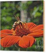 Pollenating Wood Print