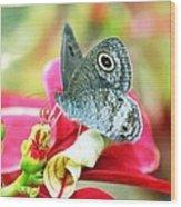 Pollination Wood Print