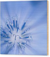 Pollination  Blue Chicory Wood Print