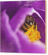 Pollination Party Of One Wood Print by Vicki Jauron