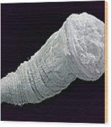 Polychaete Trochophore Larva, Sem Wood Print