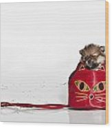 Pomeranian 2 Wood Print by Everet Regal