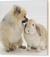 Pomeranian Dog And Rabbit Wood Print