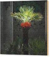 Pompeii Palm Tree Italy Wood Print