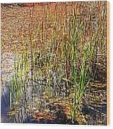 Pond And Rushes Wood Print
