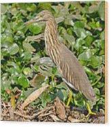 Pond Heron Wood Print