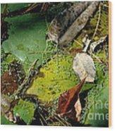 Pond Lumens Wood Print