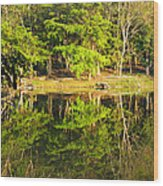 Pond Reflection Guatemala Wood Print