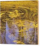 Pond Scum Two Wood Print