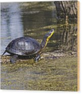 Pond Turtle Basking In The Sun Wood Print