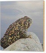 Pondering Toad Wood Print