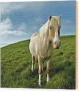 Pony On Mykines Wood Print