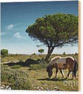 Pony Pasturing Wood Print