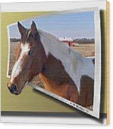 Pony Posing Wood Print