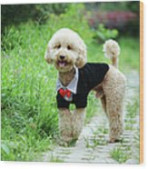 Poodle Wearing Suit Wood Print