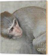 Poor Monkey Wood Print