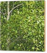Poplar Tree And Leaves No.368 Wood Print