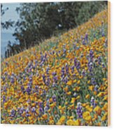 Poppies And Lupine Flowers Blanket Wood Print