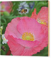 Poppies And Pollinator Wood Print