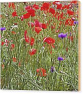 Poppies And Purple Flowers Wood Print