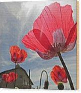 Poppies And Sky Wood Print