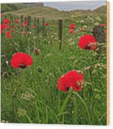 Poppies By The Roadside In Northumberland Wood Print