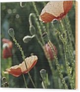Poppies In A Field In Provence Wood Print