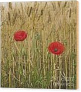 Poppies  In A Field Of Barley Wood Print