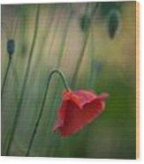 Poppies Mood Wood Print